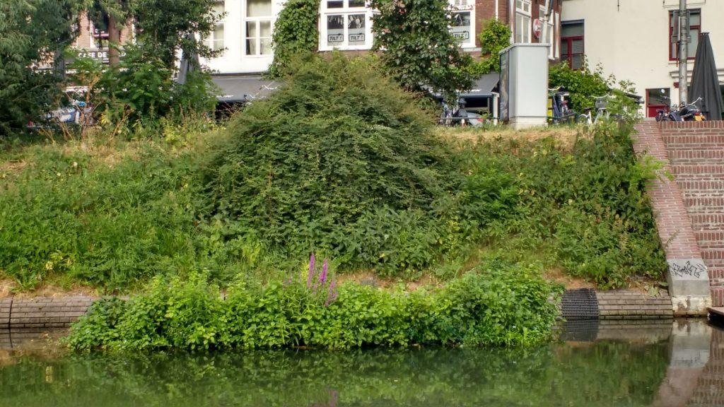 vegetatie-eiland centrumzijde Wittevrouwenbrug