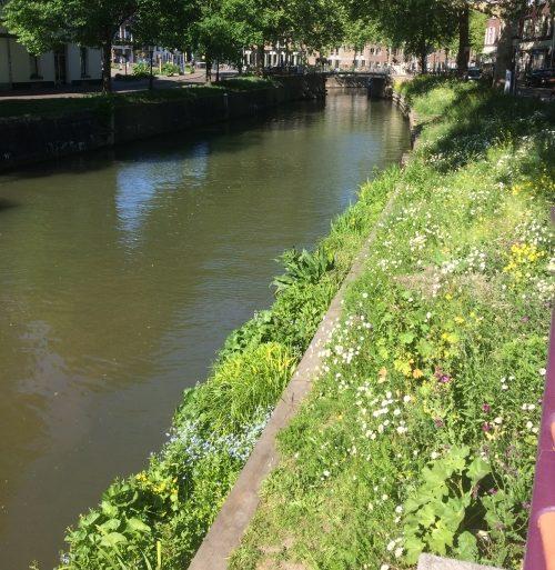 mei 2020, bloemrijk talud v Asch v Wijckbrug
