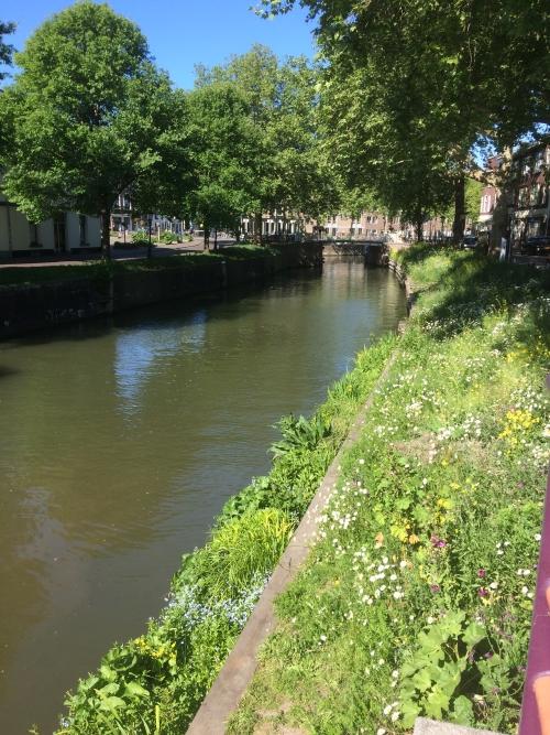 mei 2020, bloemrijk eiland en kant v Asch v Wijckbrug